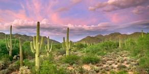 HealthSouth Rehabilitation Institute of Tucson Arizona Image